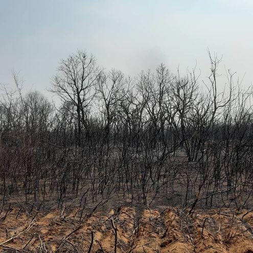 Situación del Chaco paraguayo por incendios forestales.