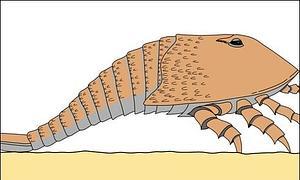 Hallan el rastro de un monstruoso escorpión de dos metros en Escocia