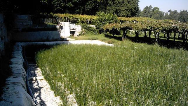 Depuración de agua con juncos o lirios: barato y ecológico