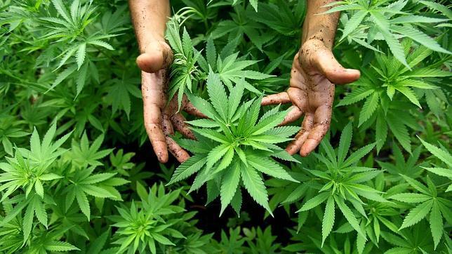 Los agricultores libaneses defienden a tiros su marihuana