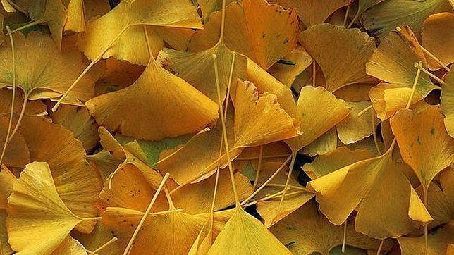 Por qu las hojas de los rboles cambian de color en