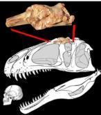 El «Ojo de Sauron», el dinosaurio gigante de Marruecos