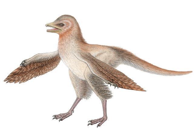 Hallan un nuevo dinosaurio con alas
