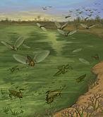 No eran pulgas gigantes de dinosaurio, solo eran moscas