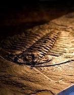 La roca que alimentó la vida en la Tierra