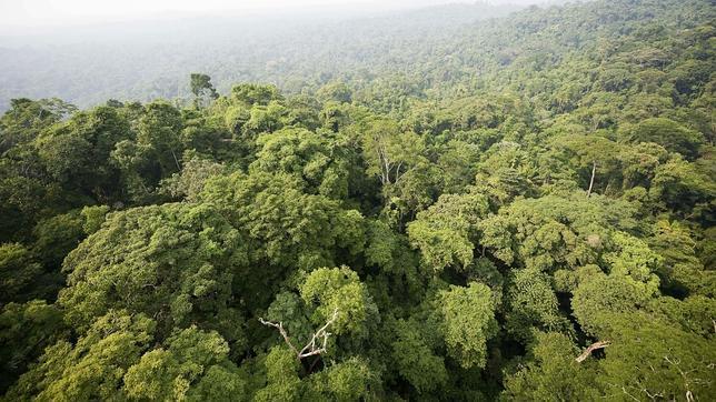 Detectan un mayor crecimiento de la vegetación mundial por el incremento del CO2 atmosférico