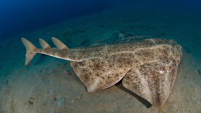 Piden la creacin de una reserva de tiburones en Canarias