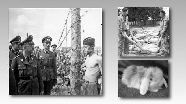 El paraíso nazi de los conejos de angora