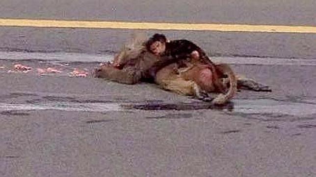 El llanto de una cría de mono abrazada a su madre muerta conmueve en Arabia