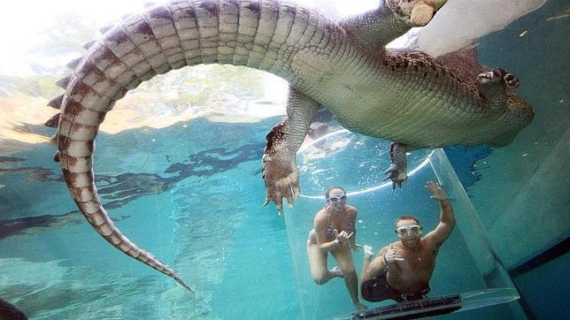 Buceando con cocodrilos de agua salada más grandes del mundo
