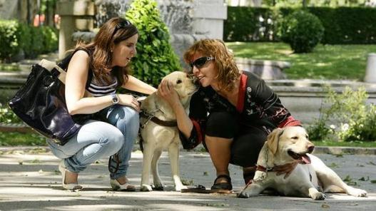 perros amigos grupo amas a tu perro más que nadie