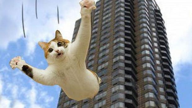 El sndrome del gato volador
