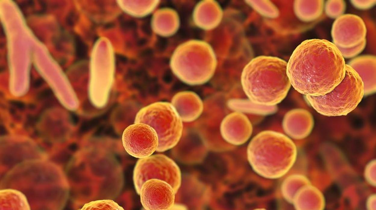 Las cuatro nuevas enfermedades de transmisin sexual que ms preocupan a los expertos en la