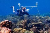 A underwater shot of a snorkeller holding an acoustic apparatus over coral.