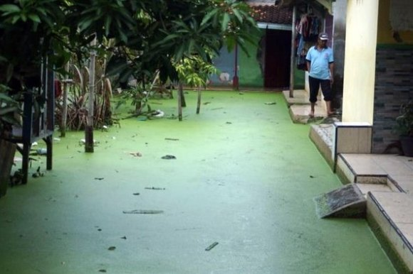 A man stands next to bright green floodwaters