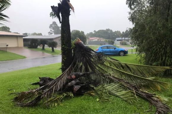 Tree ripped in half in North Queensland wild weather.