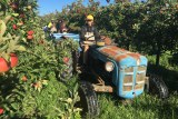 Backpackers picking apples on a farm from a tractor