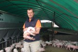 A man holds a piglet while standing in covered sow stalls.