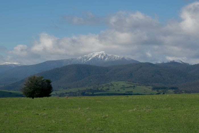 A wide shot of a snow-tipped Mount Buller.