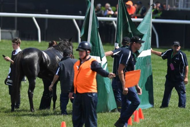 A screen is erected around Cliffsofmoher at the Melbourne Cup