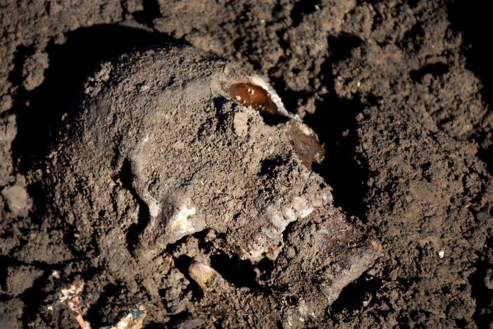 A close up of a skull caked in earth in a mass grave found in Iraq.
