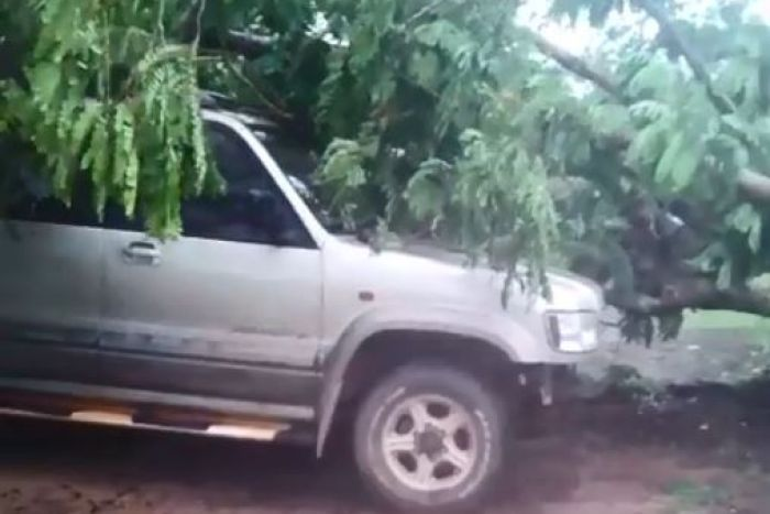A still from a video of a tree that has smashed into a four-wheel-drive after it was ripped out by its roots