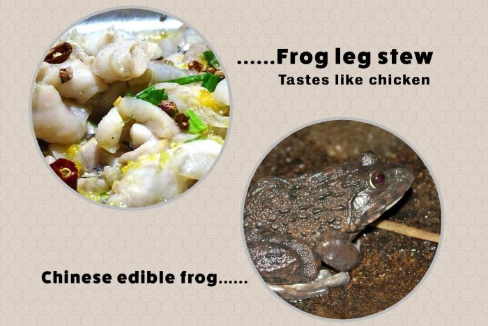 """A picture of frog leg stew alongside the words """"tastes like chicken"""" next to a picture of a living frog."""