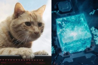 A composite image of Goose, an alien Flerken that looks like a ginger cat, and the Tesseract, a blue cube.