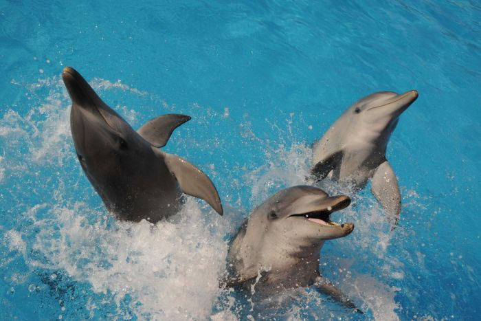Dolphins Happiness Living In Captivity At Marine Animal