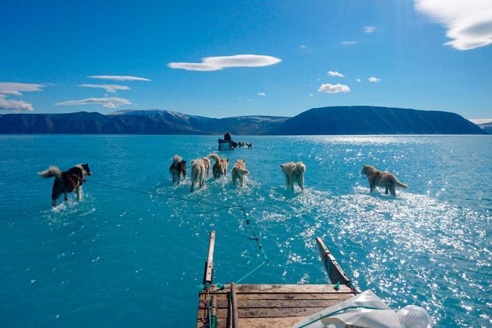 Sled dogs make their way in north-west Greenland with their paws in melted ice water.