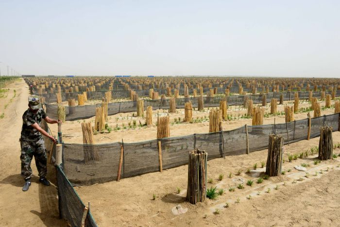 A man builds a shade cloth fence around small trees.