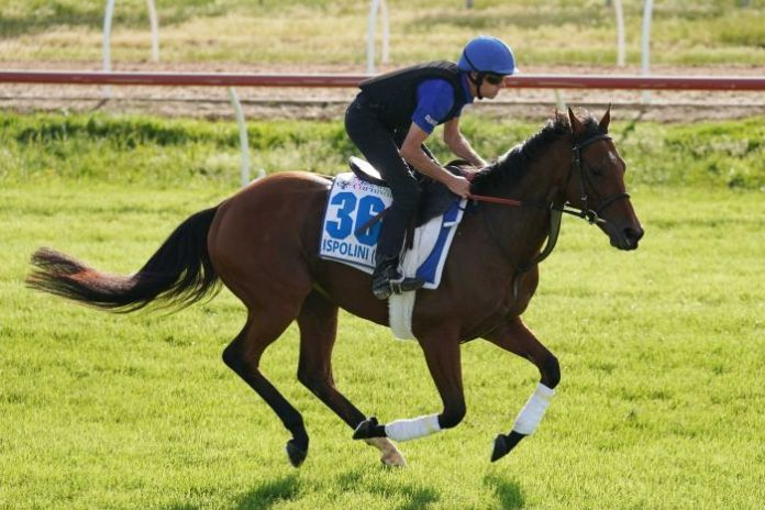An international racehorse is caught in mid-gallop at the quarantine centre at Werribee.