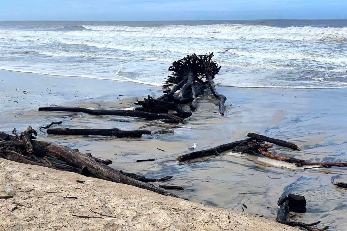 A massive tree stump washed up on a beach in heavy surf conditions
