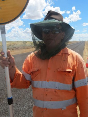 Fly numbers in outback Queensland worst in decades  ABC