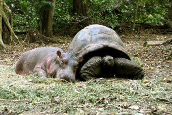 The best of friends: Owen and Mzee