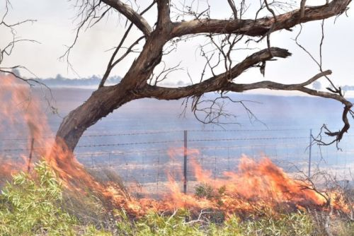 Flames engulf roadside trees
