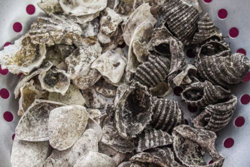 Some of the shells on display are 1,000 to 3,000 years old.