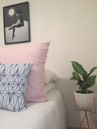 Houseplant in a bedroom