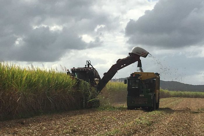A cane harvester in action.
