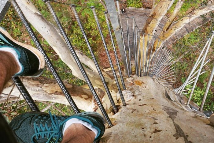 The view straight down from 53 metres up a tree near Pemberton WA