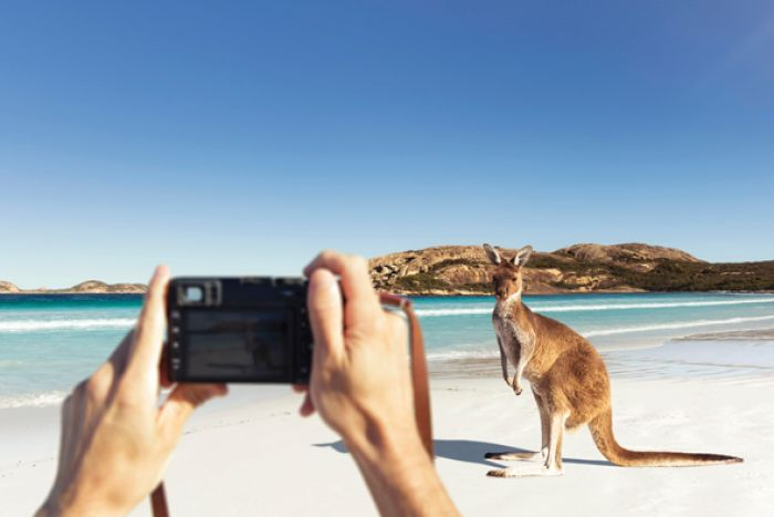 A camera in the foreground takes a shot of a kangaroo on a striking white beach.