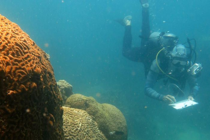 Researcher conducting survey on the Great Barrier Reef as part of study into replanting coral.