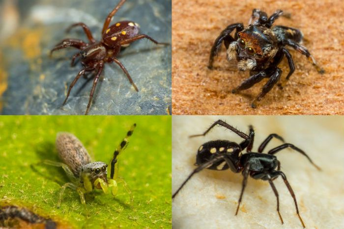 A composite image of four different spiders.