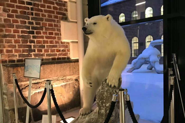 A stuffed polar bear sits in an exhibit