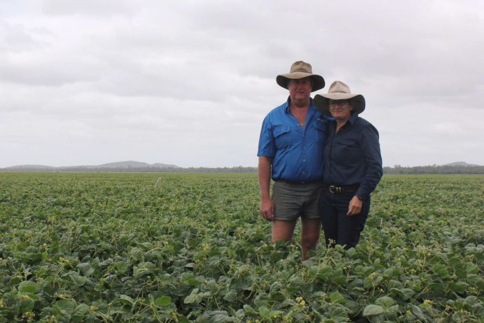 Darren Hosking and Jo Hosking stand in mung bean crop