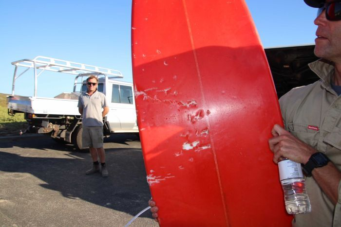 A red surfboard with bite marks from a shark in the back of a vehicle.