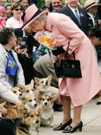 Queen Elizabeth II stops to view a group of corgi dogs surrounded by crowd.
