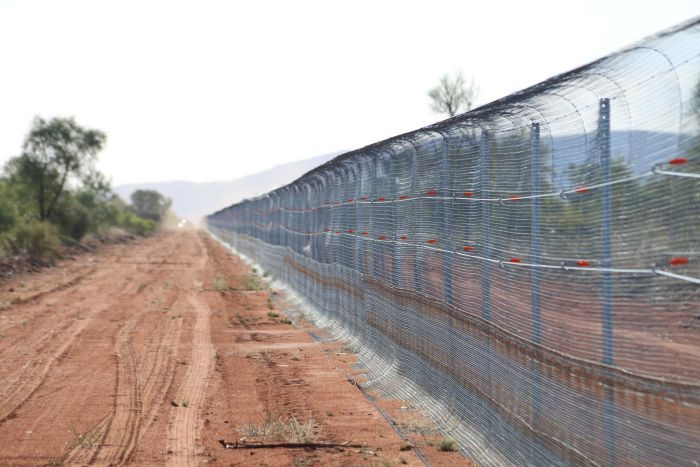 A long dirt road in NT with a long fence for keeping out feral cats