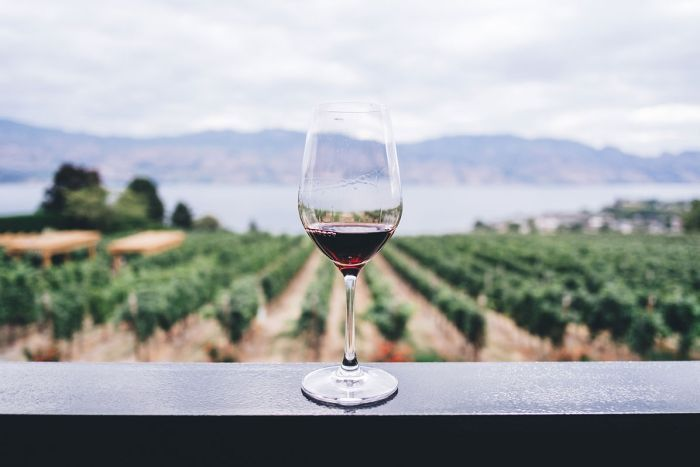 image of wine glass with vineyard in the background