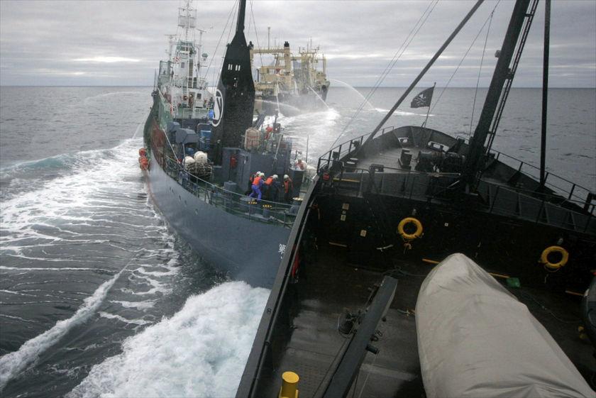 Sea Shepherd/Reuters